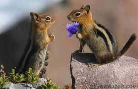 You moved a girl-chipmunk into our hole, gave her my nuts (and yours), and everyone saw. But these flowers make it all better, baby. Give me a smooch.