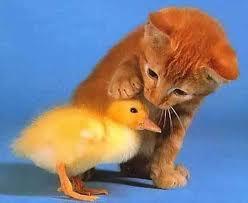 kitties and ducks