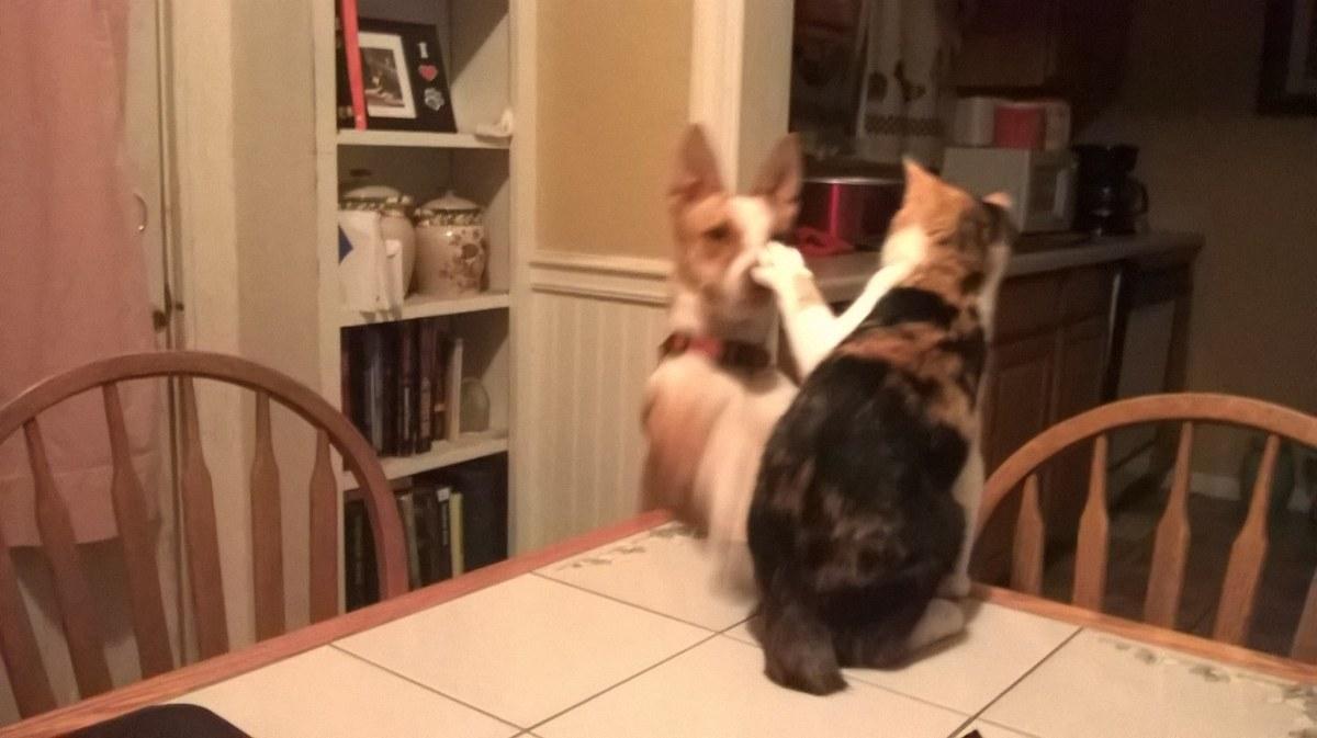 Piper showed Sheba just who really runs things around here....