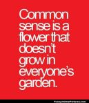Common-Sense-Quote-Funny-Online-Pictures